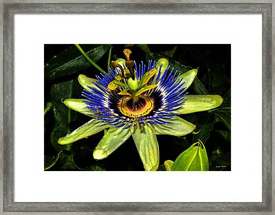 Passion Flower 003 Framed Print