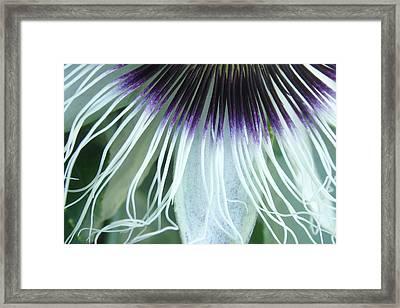 Passion Flower 3 - Passiflora Edulis Var. Flavicarpa Framed Print by Elena Schaelike