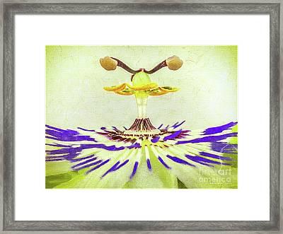 Passion Flower Closeup Framed Print