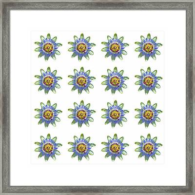Passion Flower Design Framed Print by Bishopston Fine Art
