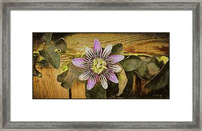 Passion Flower Framed Print by Kenneth Roberts
