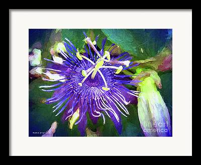 Passiflora Mixed Media Framed Prints