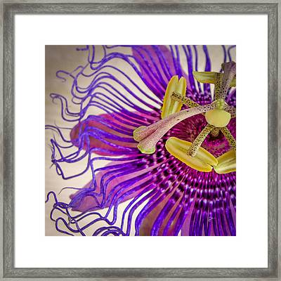 Passion Flower Squared Framed Print by TK Goforth