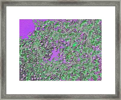 Passion Flower Tree Framed Print by Sherri's Of Palm Springs