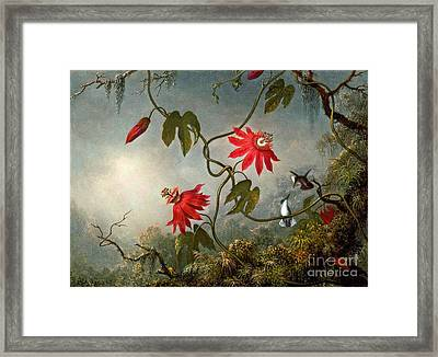 Passion Flowers And Hummingbirds 1870 Framed Print