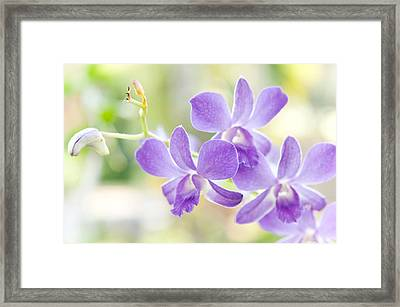 Passion For Flowers. Purple Orchids Framed Print by Jenny Rainbow
