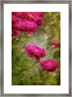 Passion For Pink Framed Print