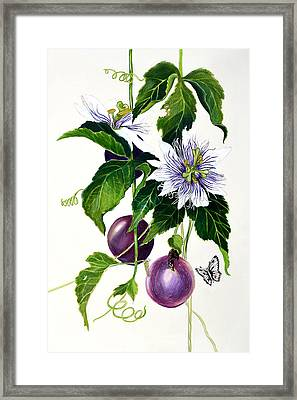 Passion Fruit Framed Print by Lorraine Romaior