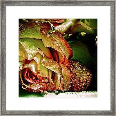 Passion Framed Print by Monroe Snook