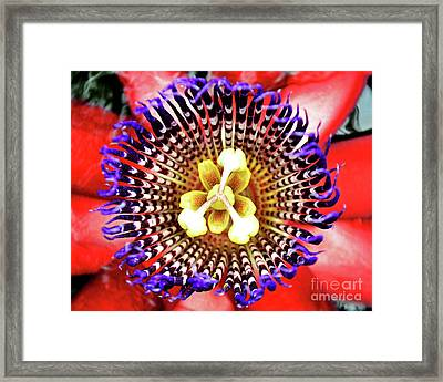 Passion Zoom Framed Print