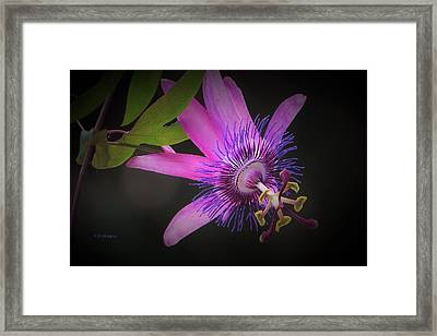 Passionate About You Framed Print
