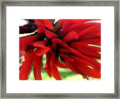 Passionate Red Framed Print by Jean Booth