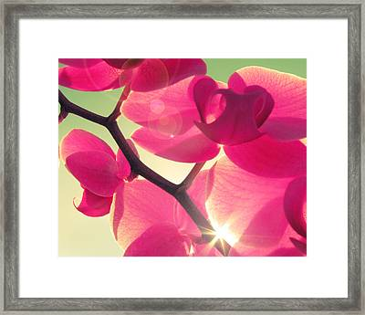 Passionato Framed Print by Amy Tyler