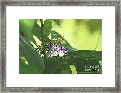 Passionflower Blooming Framed Print by Robyn King