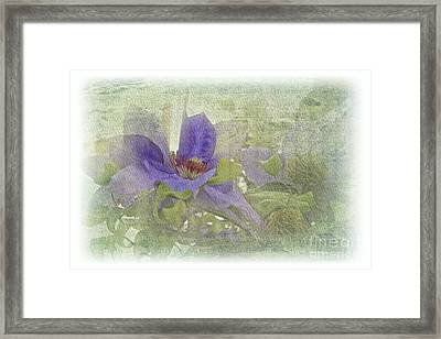 Passionflower Framed Print by Lali Kacharava
