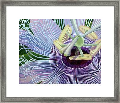 Passionflower Vine Framed Print
