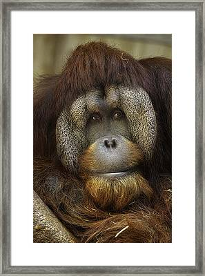 Framed Print featuring the photograph Passive by Cheri McEachin