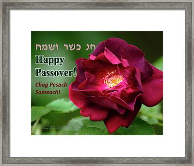 Passover Rose Framed Print by Brian Tada