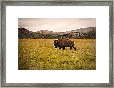 Past His Prime Framed Print by Tamyra Ayles