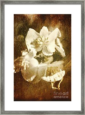 Past Life Flowers Framed Print by Jorgo Photography - Wall Art Gallery