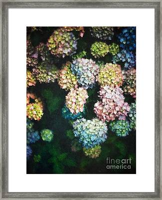 Pastel Colored Hydrangeas Framed Print