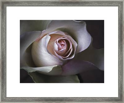 Pastel Flower Rose Closeup Image Framed Print by Artecco Fine Art Photography