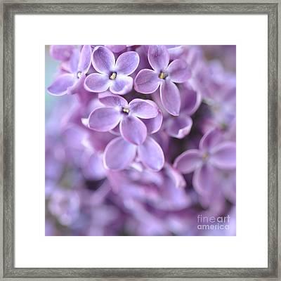 Pastel Lilacs Framed Print