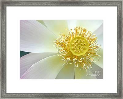 Pastel Lotus Too Framed Print by Sabrina L Ryan