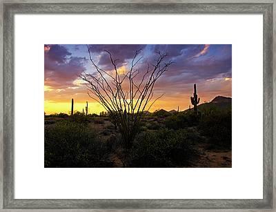 Pastel Ocotillo Sunset  Framed Print