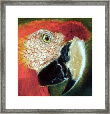 Framed Print featuring the pastel Pastel Of Red On The Head  by Antonia Citrino