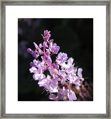 Pastel On Black Framed Print by Jean Booth
