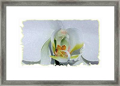 Framed Print featuring the digital art Pastel Orchid by Ellen Barron O'Reilly