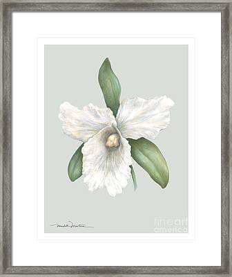 Pastel Orchid Framed Print by Meridith Martens