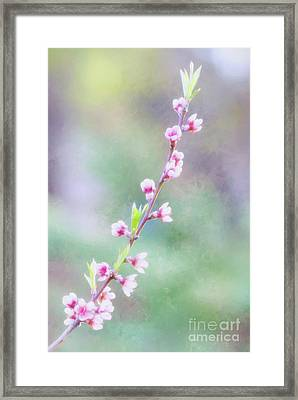 Pastel Painted Peach Blossoms Framed Print