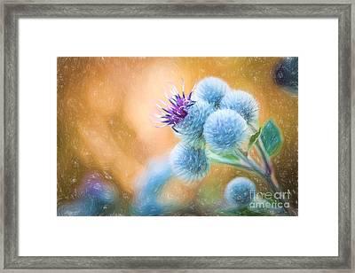 Pastel Painting Flower - Flowering Great Burdock Framed Print