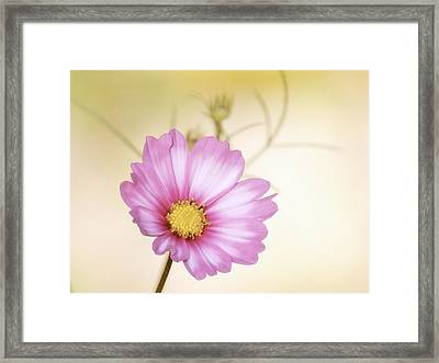 Pastel Petals Framed Print by MTBobbins Photography