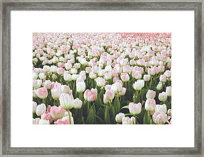 Pastel Pink Tulips- Art By Linda Woods Framed Print by Linda Woods