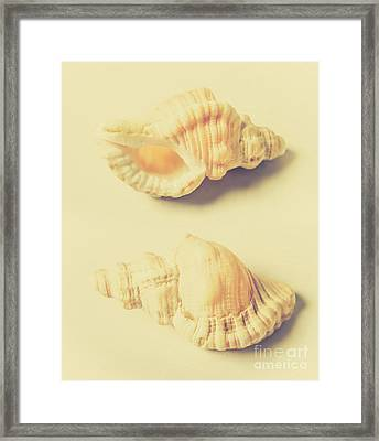 Pastel Seashell Fine Art Framed Print by Jorgo Photography - Wall Art Gallery