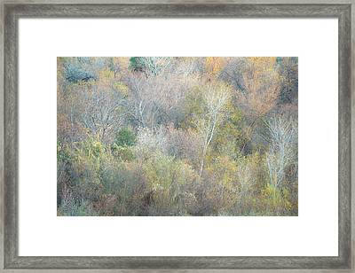 Pastel Shade Framed Print