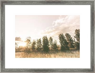 Pastel Sunset Forest Framed Print