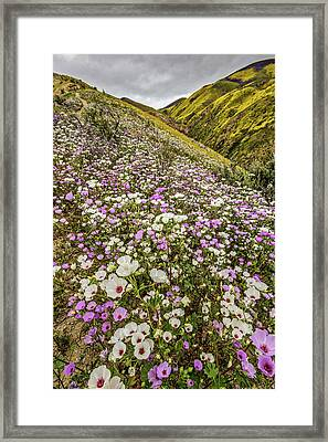 Framed Print featuring the photograph Pastel Super Bloom by Peter Tellone