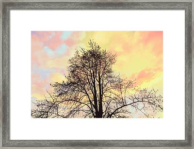 Pastel Tone Tree Silhouette At Sunset Framed Print
