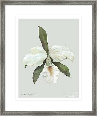 Pastel Trumpet Orchid Framed Print by Meridith Martens
