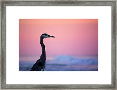 Pastels At Sunrise Framed Print by Shelby Young