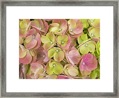 Pastels Framed Print by Eggers Photography