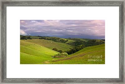 Pastoral California Hillside Framed Print by Matt Tilghman