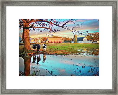 Pasture At Bacon's Castle Framed Print