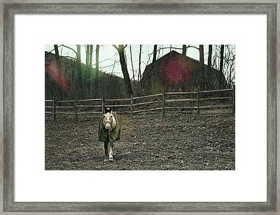 Pasture Pony Framed Print by JAMART Photography