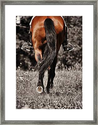 Pasture Practice Framed Print by JAMART Photography