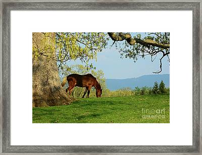 Pasture With A View Framed Print by Thomas R Fletcher